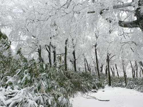 樹氷の森(氷ノ山)